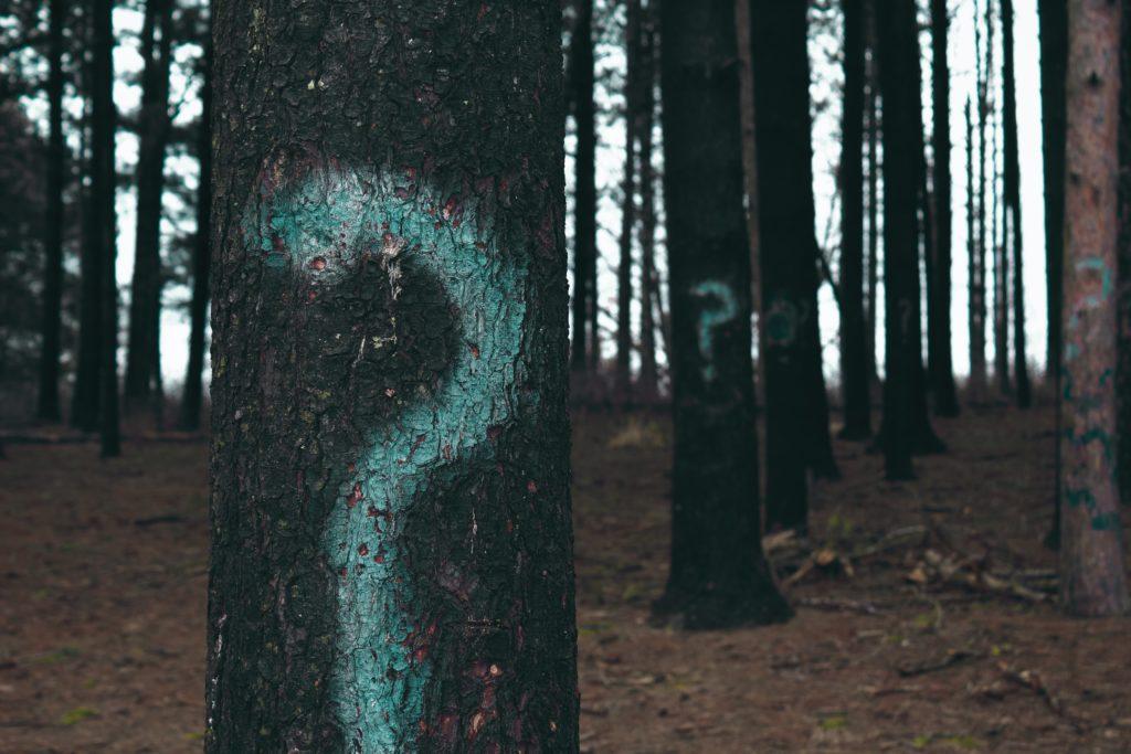 Bäume mit Fragezeichen